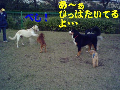 20061109221413.jpg