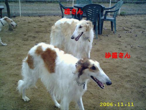 20061118222754.jpg