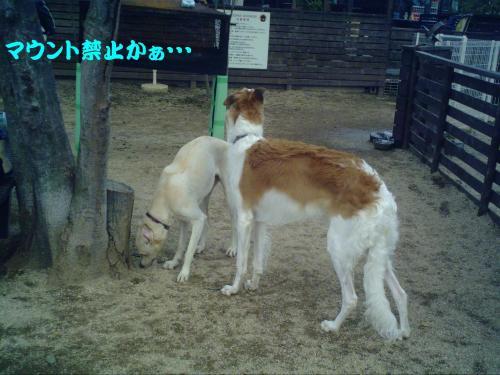 20061121214145.jpg