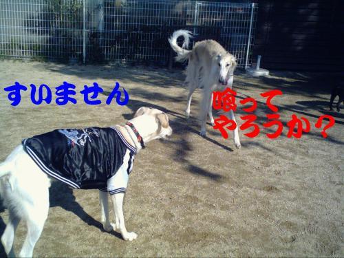 20061130210226.jpg