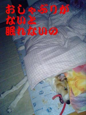 20070323221815.jpg
