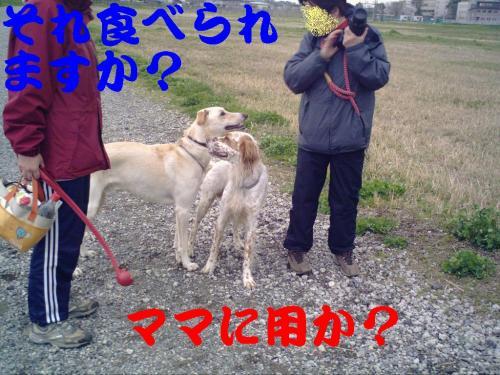 20070404163353.jpg