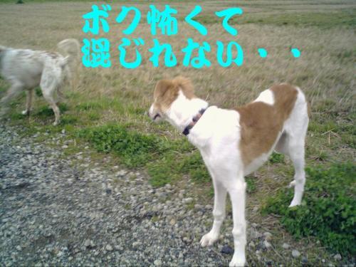 20070404163509.jpg