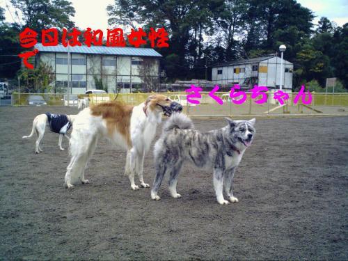 20071111205407.jpg