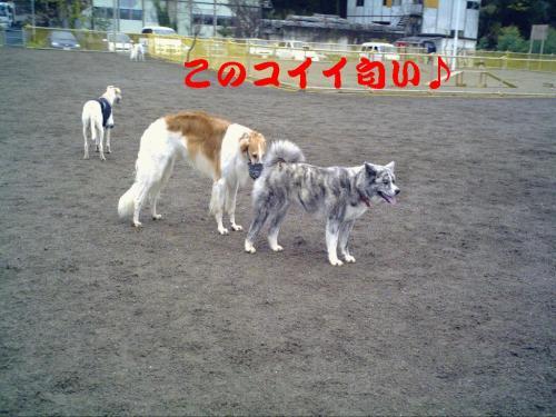 20071111211025.jpg