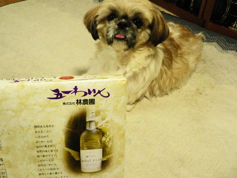五一ワイン6