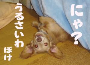 1DSC01697.jpg