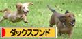 ☆人気blog☆犬!