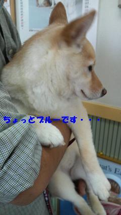 P1000167-2.jpg