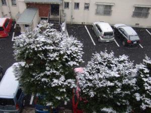 080123の雪
