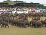 象祭り19