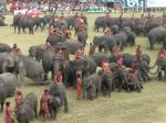 象祭り24