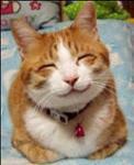 笑う猫?!