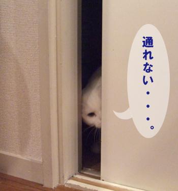 ドアめめ2
