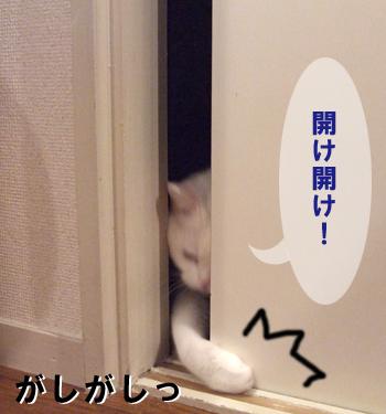 ドアめめ3