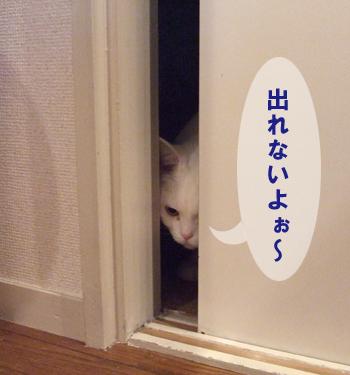 ドアめめ4