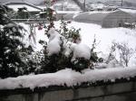 真っ白くなった我が家の裏。21日の午前7時頃