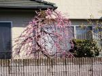 車窓からの春