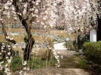 宝蔵寺 6
