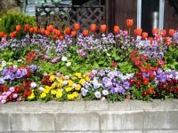 荷内の花畑2