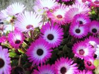 荷内の花畑3