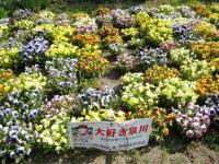 光明寺の花畑