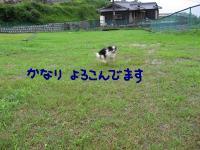 20070714234931.jpg
