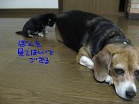 くるみベビー 053