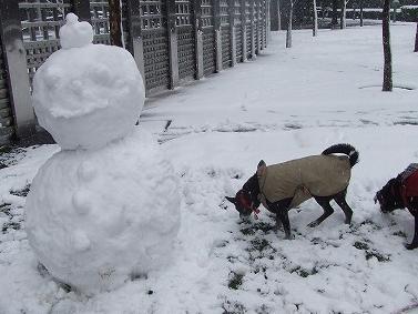 雪ダルマ頭