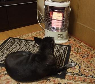 さんご暖を取る