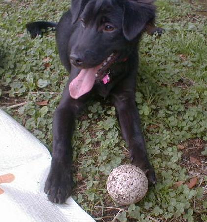 ボール遊び小