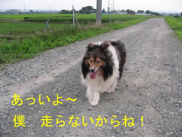 IMG_-0809.jpg
