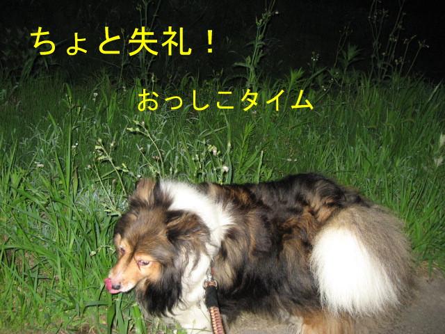 IMG_0190-1.jpg