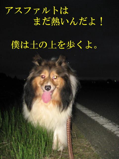 IMG_0266-1.jpg