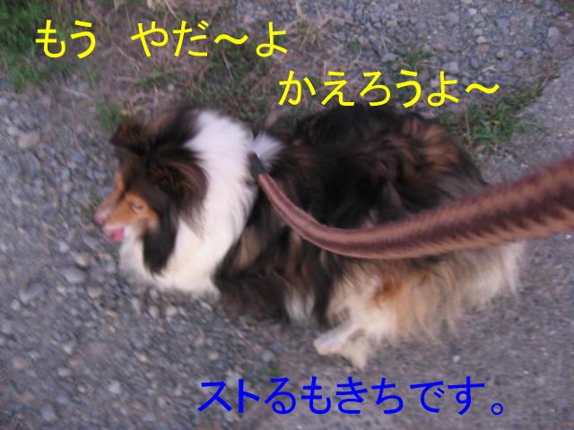 IMG_0614-11.jpg