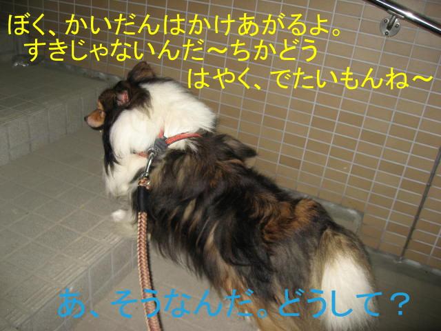 IMG_0682-1.jpg