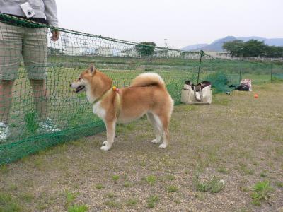 nikochan1