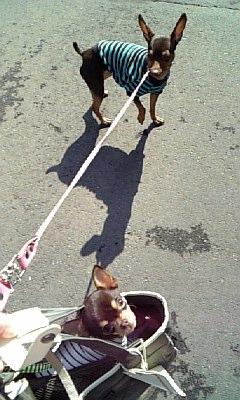 2008.2.7 散歩