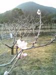 飯ノ山でわ桃がチラホラメラムラムラ