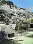 弥谷寺も桜だねぇ~