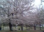 桜 博多の森
