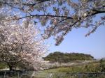 博多の森桜並木