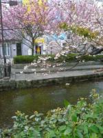 木屋町通り沿いに流れる高瀬川