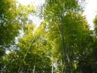京田辺のお友達の竹薮。綺麗。