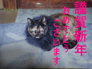20061231205506.jpg