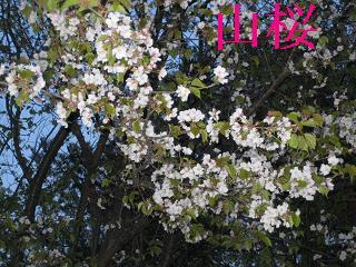 20070426212601.jpg