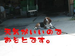 20070820102529.jpg