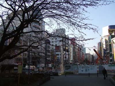 上野公園一帯 (22).jpg