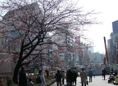 上野公園 (11).jpg