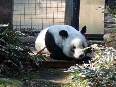 上野動物園 (29).jpg